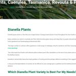 Dianella plant guide