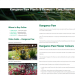Kangaroo Paws iconic Australian flower plant guide