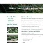 Westringia plant guide