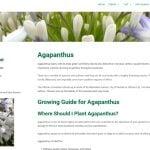 Agapanthus plant guide
